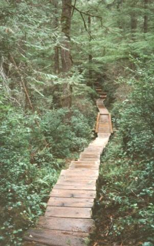 ozette_trail